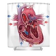 Heart Blood Flow Shower Curtain