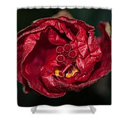 Heart Of A Hibiscus 2 Shower Curtain