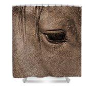 Heart Of A Horse Shower Curtain