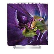 Heart Of A Purple Tulip Shower Curtain