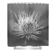 Heart Of A Red Clematis In Black And White Shower Curtain