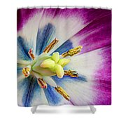 Heart Of A Tulip Shower Curtain