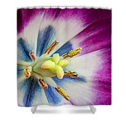 Heart Of A Tulip - Square Shower Curtain