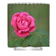 Heart Of My Heart Rose Shower Curtain