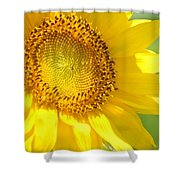 Heart Of The Sunflower Shower Curtain