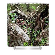 Heart-shaped Tree Shower Curtain