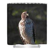 Heartful Hawk Shower Curtain