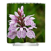 Heath Spotted Orchid Shower Curtain