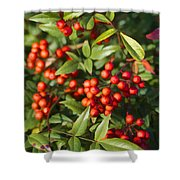 Heavenly Bamboo Red Berries Shower Curtain
