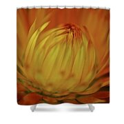 Heavenly Light Shower Curtain