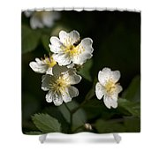 Heaven's Scent Shower Curtain by Christina Rollo