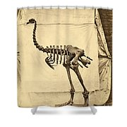 Heavy Footed Moa Skeleton Shower Curtain
