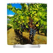 Heavy On The Vine At The High Tower Winery  Shower Curtain