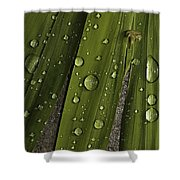 Heavy Rain Shower Curtain