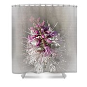Hebe Shower Curtain