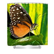 Hecale Longwing Butterfly Shower Curtain