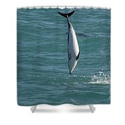 Hector Dolphin Diving Shower Curtain