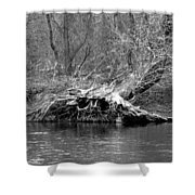 Hedge Witch Bw Shower Curtain