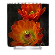 Hedgehogs In The Morning Light  Shower Curtain