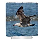 Heermanns Gull Shower Curtain