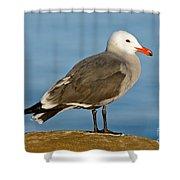 Heermanns Gull On Rock Shower Curtain