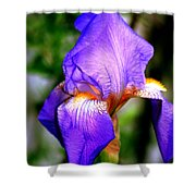 Heirloom Iris Purple Shower Curtain