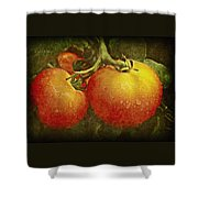 Heirloom Tomatoes On The Vine Shower Curtain