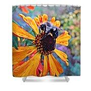 Helenium Bumble Bee Shower Curtain
