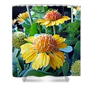 Helenium Flowers 1 Shower Curtain