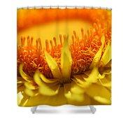Helichrysum Bracteatum Named Strawburst Yellow Shower Curtain