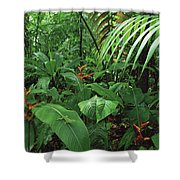 Heliconia And Palms With Green Anole Shower Curtain
