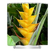 Heliconia Caribea Shower Curtain