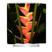 heliconia from Costa Rica 8 Shower Curtain