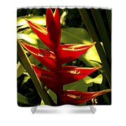 Heliconia II Shower Curtain