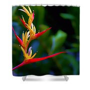 Heliconia -parrot's Beak I Shower Curtain