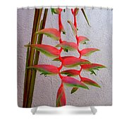 Heliconia Platystachys Shower Curtain