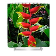 Heliconia Rostrata 2 - A Blooming Heliconia Rostrata Flower Shower Curtain