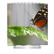 Heliconius Butterfly On Green Leaf Shower Curtain