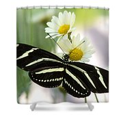 Heliconius Charithonia Shower Curtain