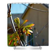 Helicopter Seeds 3 Shower Curtain