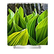 Hellebore And Aspens Shower Curtain