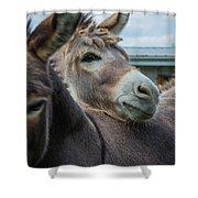 Hello Donkey Shower Curtain
