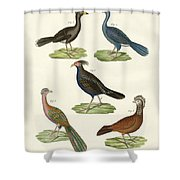 Hen-like Birds Of Hot Countries Shower Curtain