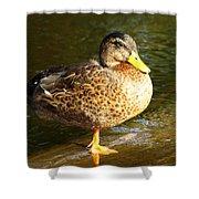 Hen Mallard Duck Shower Curtain