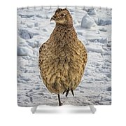 Hen Pheasant In The Snow Shower Curtain