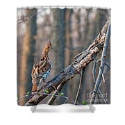 Hen Ruffed Grouse On Roost Shower Curtain