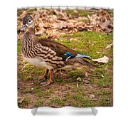 Hen Woody Shower Curtain