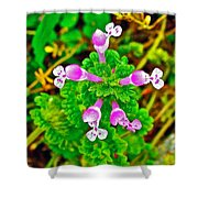 Henbit At Chickasaw Village Site At Mile 262 Of Natchez Trace Parkway-mississippi Shower Curtain