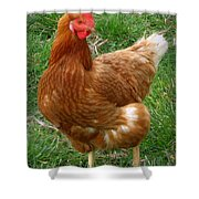 Henny Penny Shower Curtain