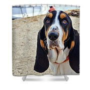 Henry The Basset Shower Curtain